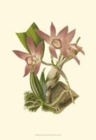Blushing Orchids I Fine Art Print