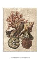 Crackled Shell and Coral Collection on Cream I Fine Art Print