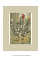 Cassell's Roosters with Mat II Fine Art Print