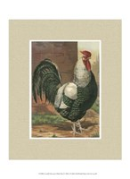 Cassell's Roosters with Mat IV Fine Art Print