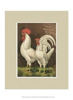 Cassell's Roosters with Mat VI Fine Art Print