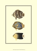 Antique Tropical Fish IV Fine Art Print