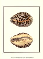 Leopard Cowry Shells Framed Print