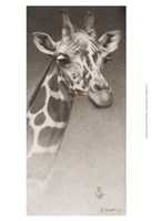 Jean, the Giraffe Fine Art Print