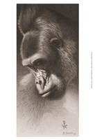 Silver Back, the Gorilla Fine Art Print