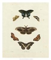 Butterflies III Framed Print