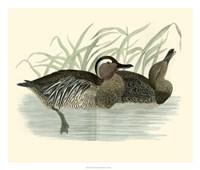 Ducks II Giclee
