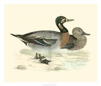 Ducks III Giclee