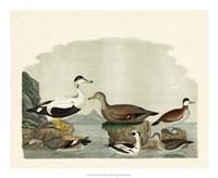 Duck Family I Giclee