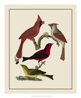 Bird Family IV Giclee