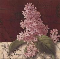 Postcard Lilac Framed Print