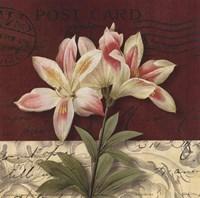 Postcard Lily Fine Art Print