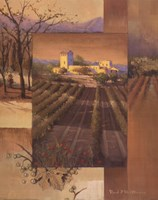 Sunrise Vineyard Fine Art Print