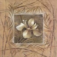 Spa Iris Fine Art Print