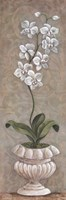 Lavish Orchids I Fine Art Print