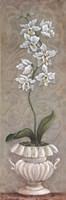 Lavish Orchids II Fine Art Print