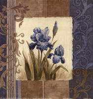 Blue Iris Scroll Fine Art Print