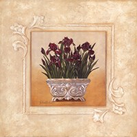 Red Irises Fine Art Print