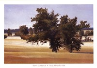 Montpellier Oak Fine Art Print