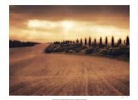 Cypress Study - Tuscany Framed Print
