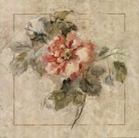 Provence Rose II Framed Print