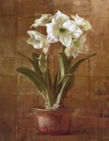 White Amaryllis on Bronze Fine Art Print