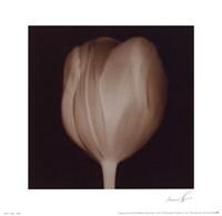 Tulip Fine Art Print
