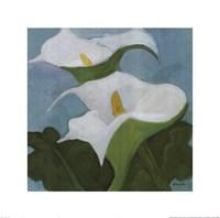Calla Lillies 5 Fine Art Print