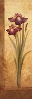 Grandiflora I Framed Print