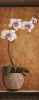 Hanna's Orchids I - petite Framed Print
