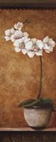 Hanna's Orchids II - mini Fine Art Print