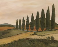 Shady Tuscan Road Fine Art Print