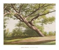 Leaning Tree, 2003 Fine Art Print