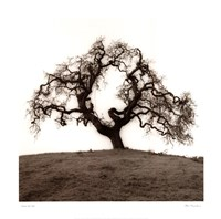 Hillside Oak Tree Framed Print