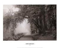 Fog III Framed Print