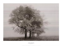 Harmony in Fog Fine Art Print