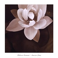 Amazon Lotus Fine Art Print