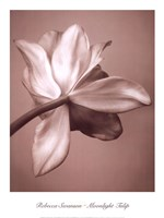 Moonlight Tulip Fine Art Print
