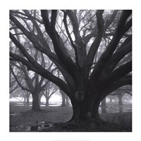 Oak Grove, Winter Fine Art Print