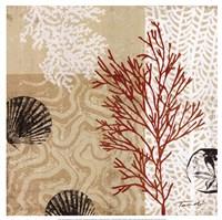Coral Impressions II Framed Print