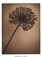 Allium I Fine Art Print
