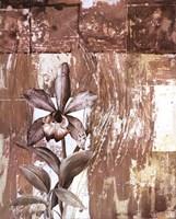Nature's Orchids I Framed Print