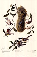 Black-Capped Chickadee Fine Art Print