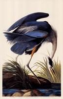 Great Blue Heron Fine Art Print