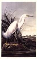 Snowy Egret Fine Art Print