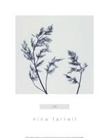 Dill Framed Print
