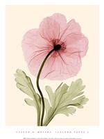 Iceland Poppy I (Med) Framed Print