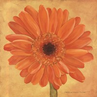 Orange Gerber Fine Art Print
