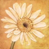 White Gerber Fine Art Print