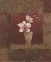 Blush Orchid II Fine Art Print